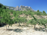 Almond Trees in the Sierra De Aitana, Alicante Area, Valencia, Spain Lmina fotogrfica por Ruth Tomlinson