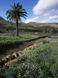 Countryside, Haria, Lanzarote, Canary Islands, Spain Photographic Print by D H Webster