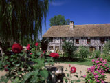 Roses in Front of Typical Timbered Farmhouse, Near St. Pierre-Sur-Dives, Calvados, France Photographic Print by Ruth Tomlinson