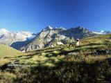View to the Ober Gabelhorn, Sheep in Foreground, Zermatt, Valais, Switzerland Photographic Print by Ruth Tomlinson