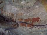Rock Paintings, Matopo Park, Zimbabwe, Africa Fotodruck von I Vanderharst