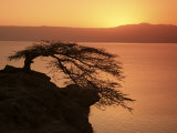 Acacia Tree Silhouetted Against Lake at Sunrise, Lake Langano, Ethiopia, Africa Photographic Print by D H Webster