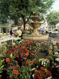 Fountain and Flower Market, Place Aux Aires, Grasse, Alpes-Maritimes, Provence, France Photographic Print by Adina Tovy