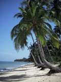 White Sandy Beach and Leaning Palm Trees, Koh Samui, Thailand, Southeast Asia Photographic Print by D H Webster
