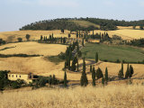 Landscape with Winding Road Lined with Cypress Trees, Monticchiello, Near Pienza, Tuscany, Italy Photographic Print by Ruth Tomlinson