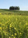 Countryside in Val d'Orcia, Siena, Tuscany, Italy Photographic Print by Nico Tondini