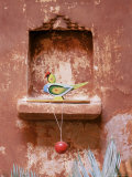 Decorative Child's Toy Parrot in Traditional Wall Niche, Ahmedabad, India Photographic Print by John Henry Claude Wilson