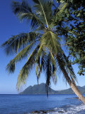 Morne Larcher, Baie De La Chery (Chery Bay), Martinique, West Indies, Caribbean, Central America Photographic Print by Guy Thouvenin