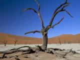 Dead Vlei, Sossusvlei Dune Field, Namib-Naukluft Park, Namib Desert, Namibia, Africa Photographic Print by Steve & Ann Toon