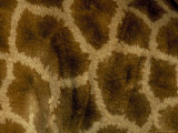 Close-Up of Coat Pattern of Giraffe (Giraffa Camelopardalis), Etosha National Park, Namibia, Africa Photographic Print by Steve & Ann Toon