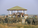 Tourists on Elephant Back Safari, Kaziranga National Park, Assam State, India Photographic Print by Steve & Ann Toon