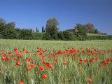 Val Di Chiana, Arezzo Area, Tuscany, Italy Photographic Print by Nico Tondini