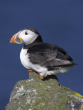 Puffin on Rock, Fratercula Arctica, Isle of May, Scotland, United Kingdom Photographic Print by Steve & Ann Toon