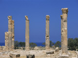 Palace Columns, Tolemaide (Ptolemais), Cyrenaica, Libya, North Africa, Africa Photographic Print by Nico Tondini