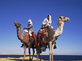 Bedouin and Camels, Sinai, Egypt, North Africa, Africa Photographic Print by Nico Tondini