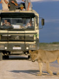 Tourists and Lion (Panthera Leo), Etosha National Park, Namibia, Africa Photographic Print by Steve & Ann Toon