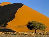 Sand Dune, Sossusvlei Dune Field, Namib-Naukluft Park, Namib Desert, Namibia, Africa Photographic Print by Steve & Ann Toon
