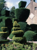 Topiary, Levens Hall, Cumbria, England, United Kingdom Photographic Print by Adam Woolfitt