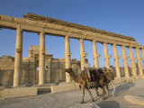 Boy on Camel in Front of the Great Colonnade, Palmyra, Unesco World Heritage Site, Syria Photographic Print by Alison Wright