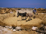 Threshing, Island of Gaydos, Crete, Greek Islands, Greece Photographic Print by Loraine Wilson