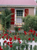 Single Storey House and Rose Covered Fence, New Zealand Fotoprint van Adam Woolfitt