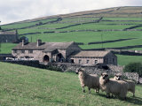 Sheep and Farm, Fox Up, Yorkshire, England, United Kingdom Photographic Print by Adam Woolfitt