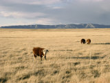 The Great Plains, New Mexico, USA Photographic Print by  Occidor Ltd