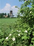 Egeskov Mill, Funen, Denmark, Scandinavia Photographic Print by Adam Woolfitt
