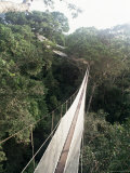 Walkway Strung Through the Treetop Canopy of the Rainforest, Napo River, Peru Photographic Print by Alison Wright