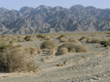 Southeast Area of the Taklamakan Desert, Xinjiang, China Photographic Print by  Occidor Ltd