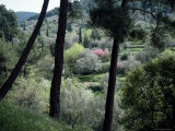 Woodland, Island of Samos, Greek Islands, Greece Photographic Print by Loraine Wilson