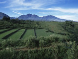Rice Paddies, Flores Island, Indonesia, Southeast Asia Photographic Print by Alison Wright