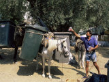 Mule Used for Collecting Rubbish, Island of Trikeri, Pelion, Greece Photographic Print by  R H Productions
