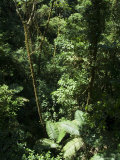 Rainforest Vegetation, Hanging Bridges Walk, Arenal, Costa Rica, Central America Photographic Print by  R H Productions