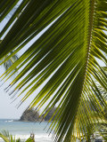Palm Leaf, Nicoya Pennisula, Costa Rica, Central America Photographic Print by  R H Productions