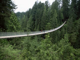 Capilano Suspension Bridge, Vancouver, British Columbia, Canada Photographic Print by Alison Wright