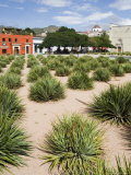 Agave Plants Used for Making Mezcal, Oaxaca City, Oaxaca, Mexico, North America Photographic Print by R H Productions 