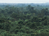 Machaca Forest Reserve in the Rain, Belize, Central America Photographic Print by  Upperhall