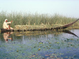 Man Gathering Reeds, Mashuf Boat, Marshes, Iraq, Middle East Photographic Print