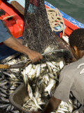 At the Fish Market, Mindelo, Sao Vicente, Cape Verde Islands, Africa Photographic Print by  R H Productions