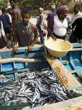 Fresh Fish Just Caught, Tarrafal, Santiago, Cape Verde Islands, Africa Photographic Print by  R H Productions