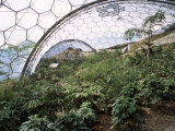 Biome Interior, the Eden Project, Near St. Austell, Cornwall, England, United Kingdom Photographic Print by  R H Productions