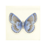 Butterfly VII Premium Giclee Print by Sophie Golaz
