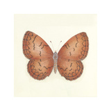 Butterfly VIII Premium Giclee Print by Sophie Golaz