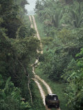 Driving in the Rain Forest, Lubaantun, Toledo District, Belize, Central America Photographic Print by  Upperhall
