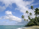 Palm Trees and Sea, Lalomanu Beach, Upolu Island, Western Samoa Photographic Print by  Upperhall