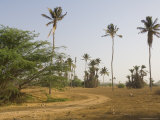 Oasis, Boa Vista, Cape Verde Islands, Africa Photographic Print by  R H Productions