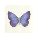 Butterfly II Premium Giclee Print by Sophie Golaz