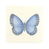 Butterfly IV Premium Giclee Print by Sophie Golaz