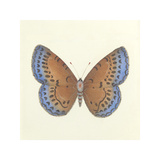 Butterfly III Premium Giclee Print by Sophie Golaz